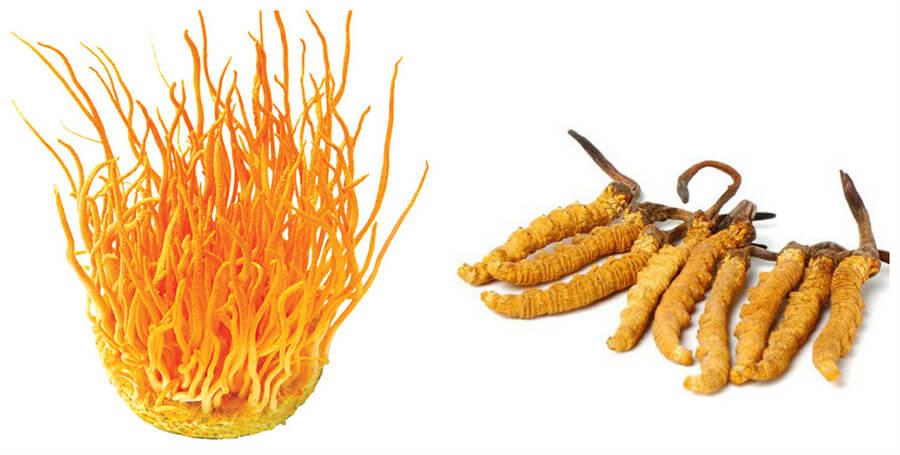 Tổng hợp cách ăn đông trùng hạ thảo hiệu quả nhất